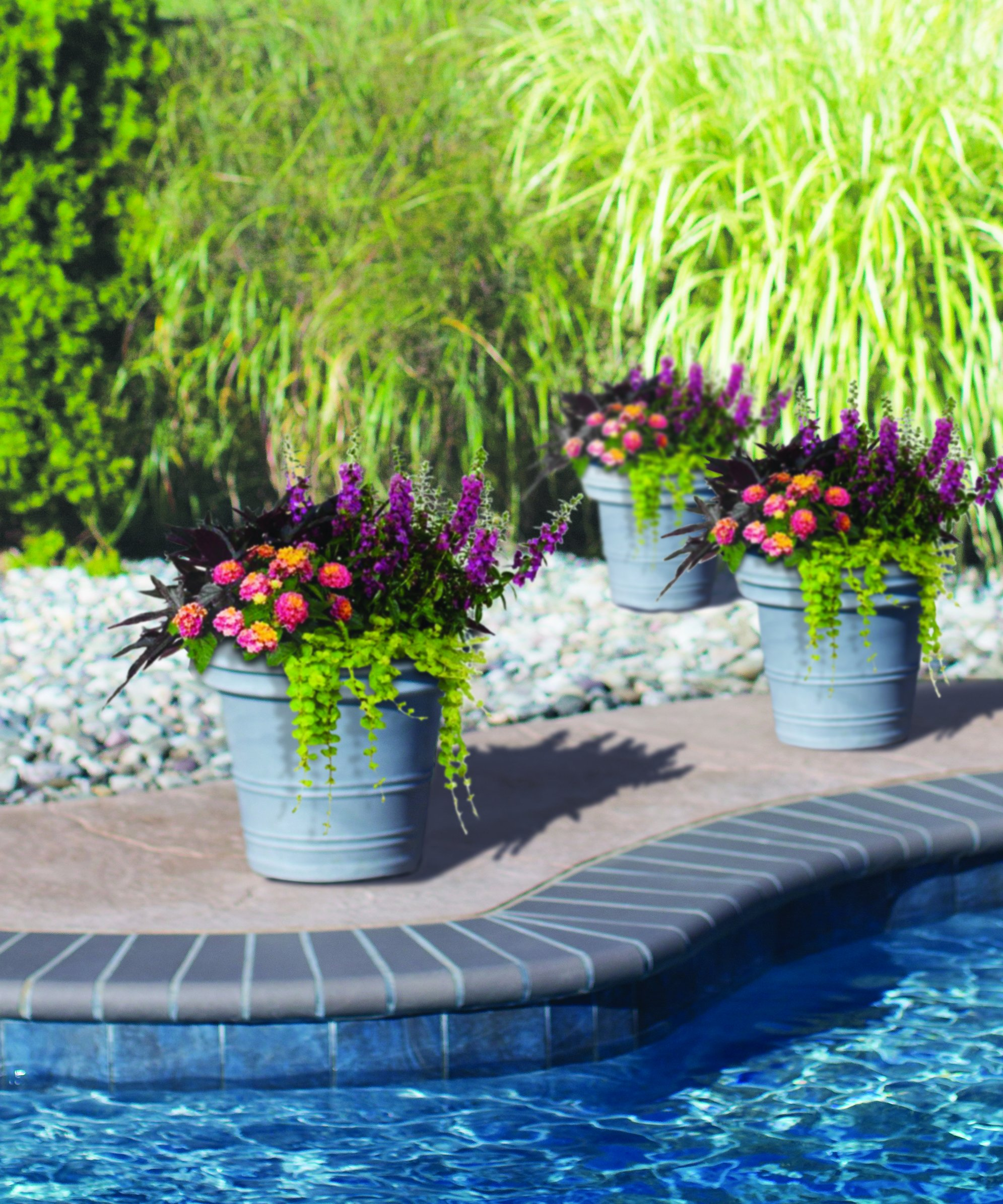 Burpee Combo 'Paradise' - Create Instant Colorful Container Gardens with Eight 4 in. pots by Burpee (Image #4)