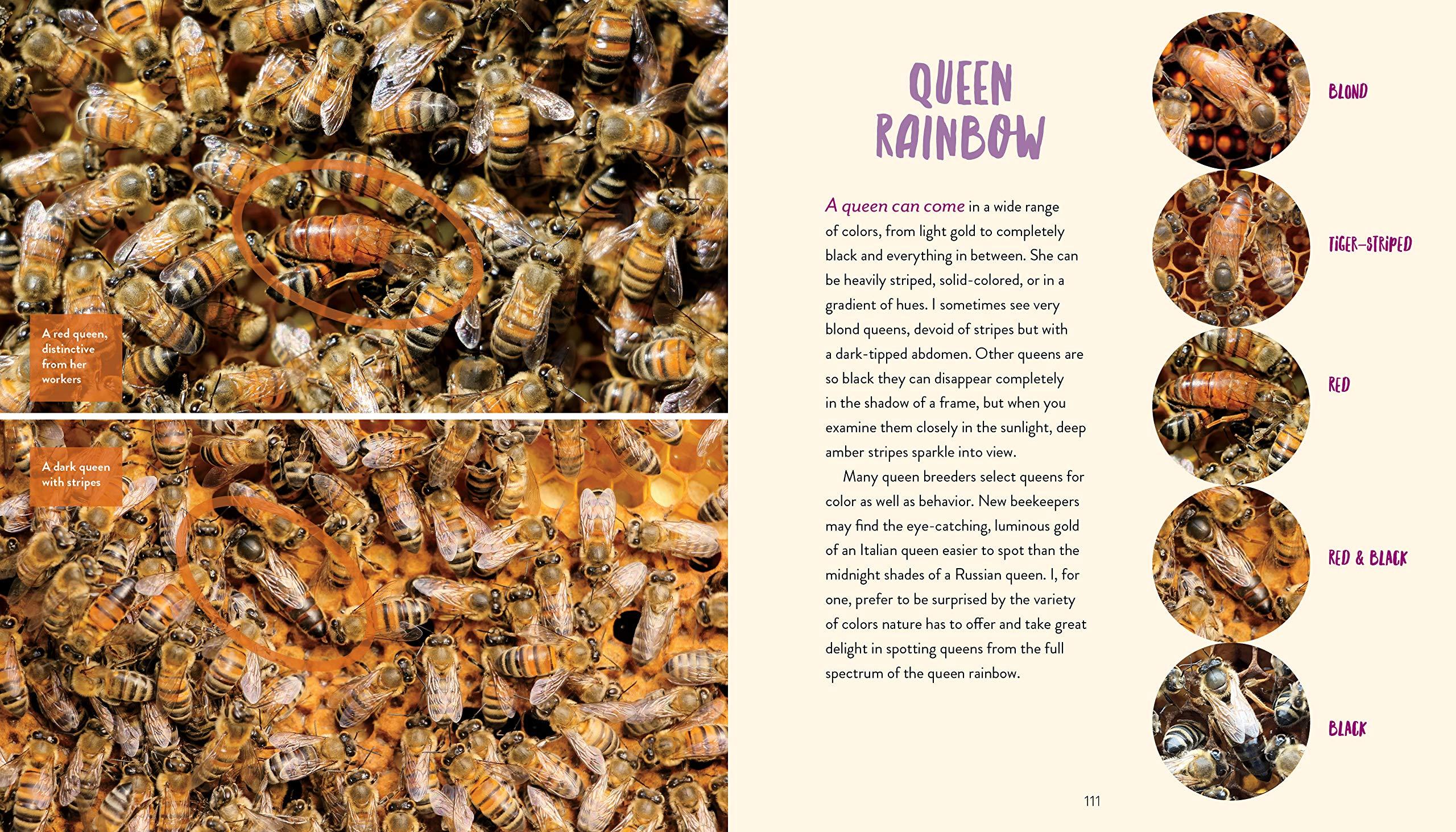 Hilary Kearney Queen Honey Bee Book Queen Spotting Book Girl Next Door Honey