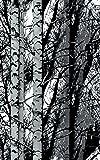 """d-c-fix 346-0611 Decorative Self-Adhesive Film, Birch Wood, 17.71"""" x78"""" Roll"""