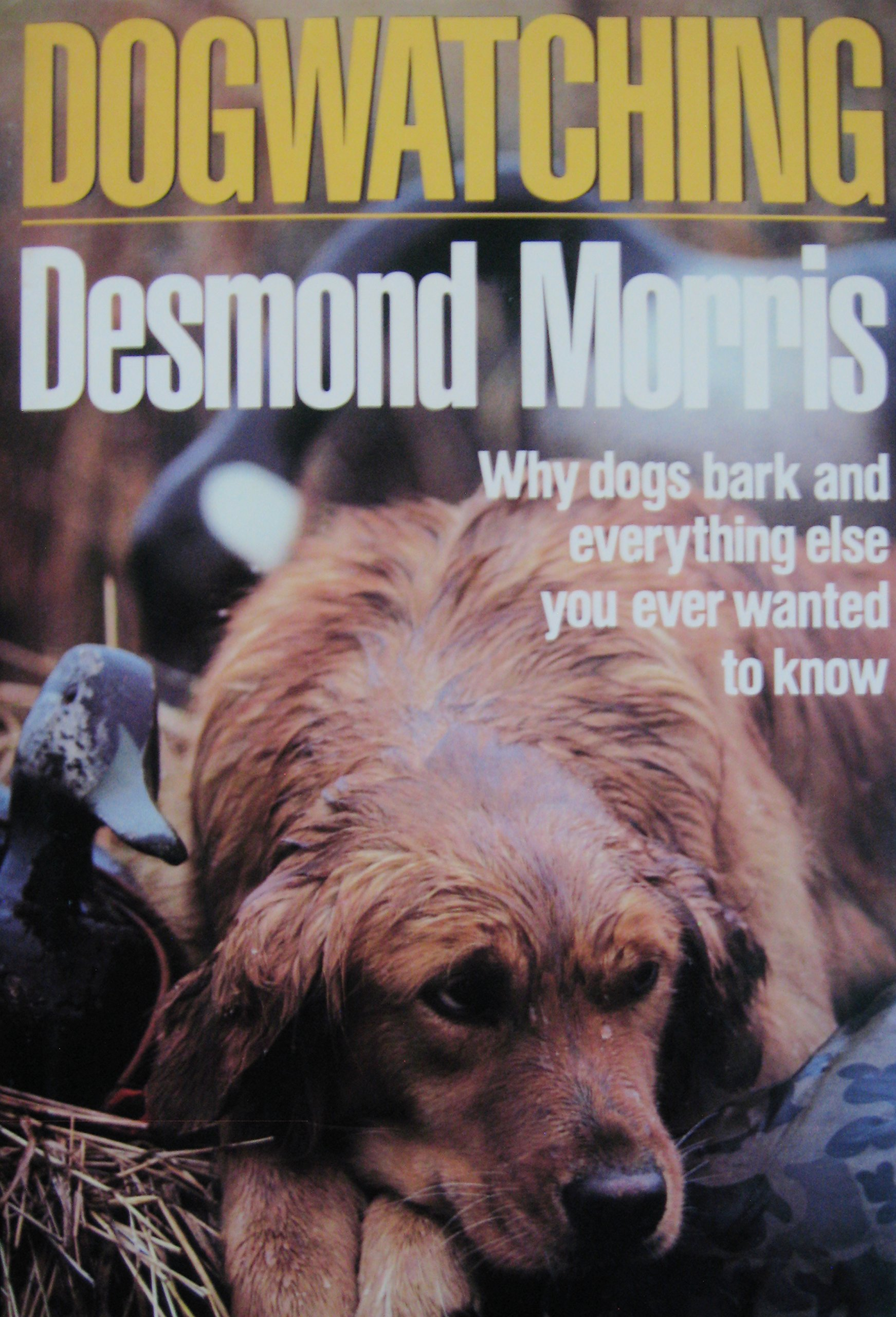 Dog Watching Desmond Morris product image