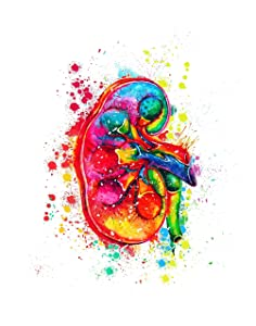 Kidney Medical Wall Art Decor Print, Ideal for Doctors Clinic, Medical Student, Hospital or Doctor Office, Great Gift for Medical Science Student, Doctor or Nurse, 11inch x 14 inch By H+CO Inspired