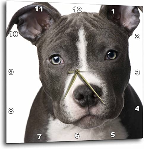 3dRose dpp_4240_2 American Pit Bull Terrier Puppy-Wall Clock, 13 by 13-Inch