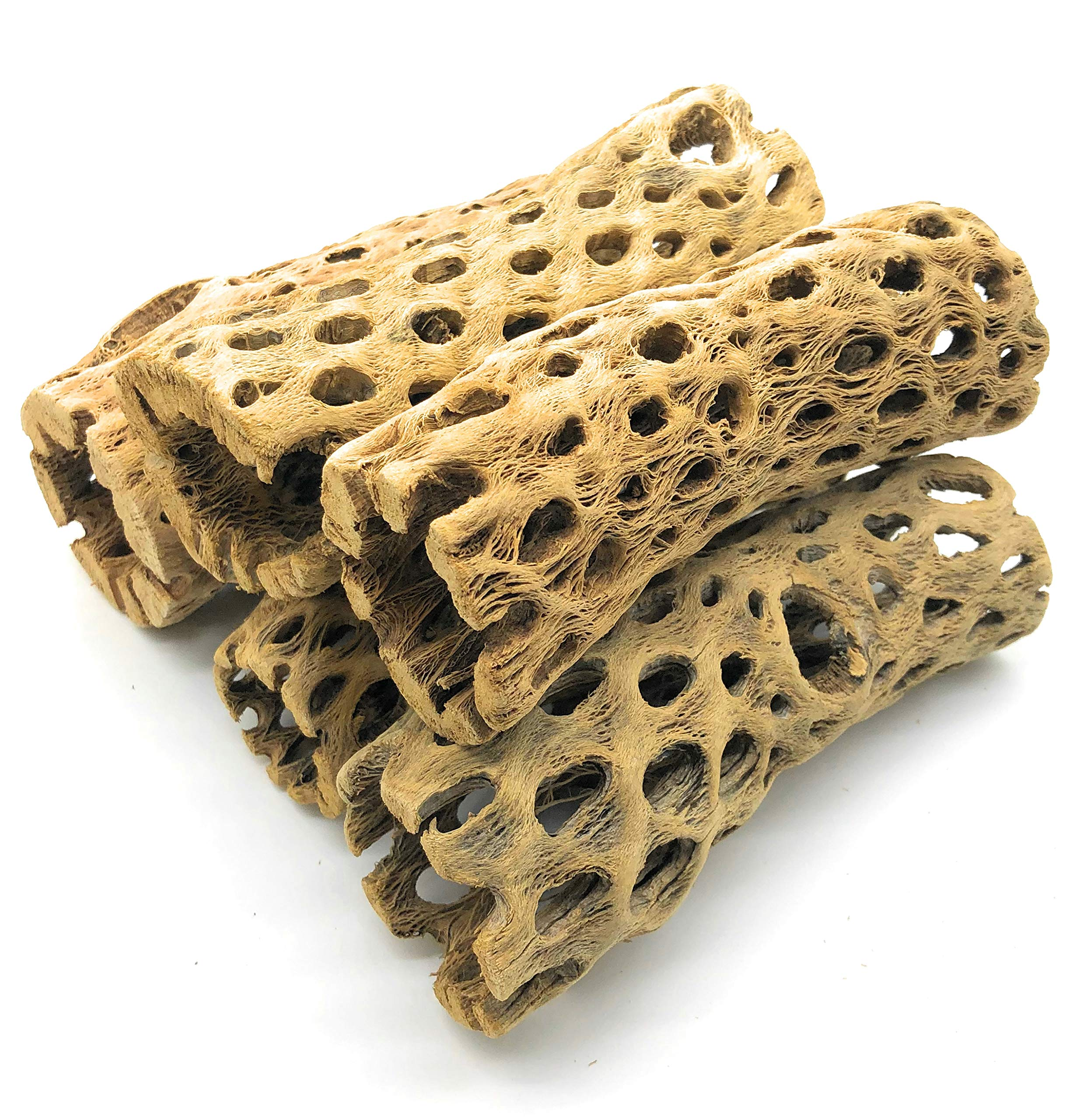SubstrateSource ''Cholla Tubes Aquarium Driftwood Decoration 6 Inches (10 Pieces) by SubstrateSource