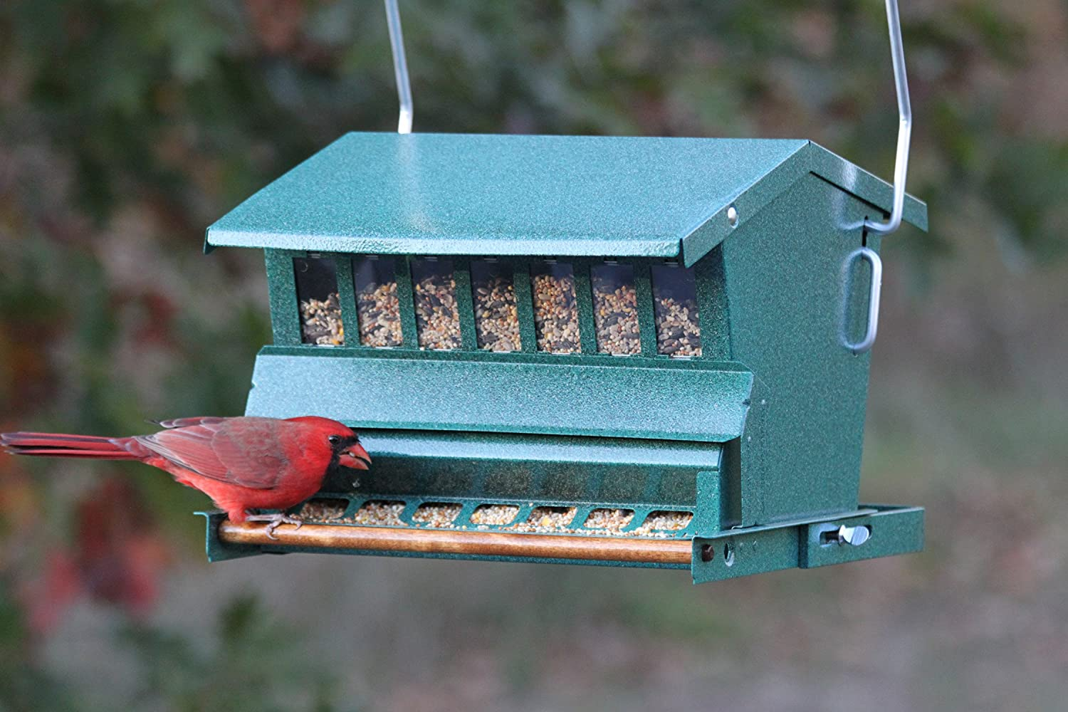 squirrel feeder selective bird proof seller best zoom com duncraft