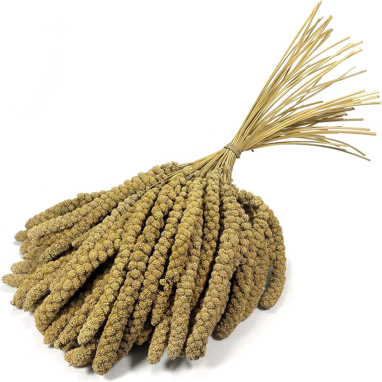 Granos de mijo de 10 pulgadas Britten & James® Premium Quality. Aproximadamente 1 kg