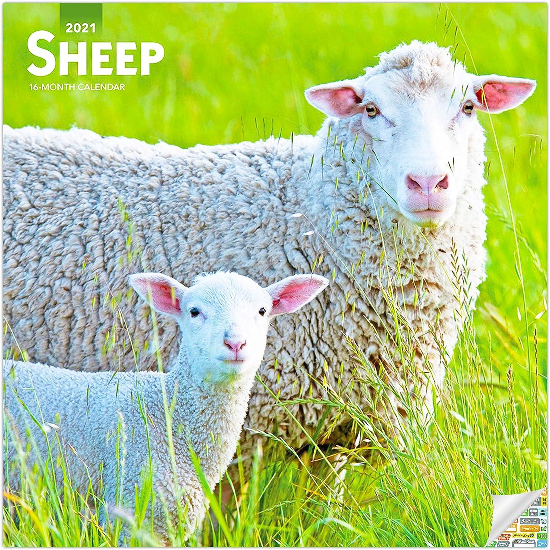 Sheep Calendar 2021 Bundle - Deluxe 2021 Sheep Wall Calendar with Over 100 Calendar Stickers (Sheep Gifts, Office Supplies)
