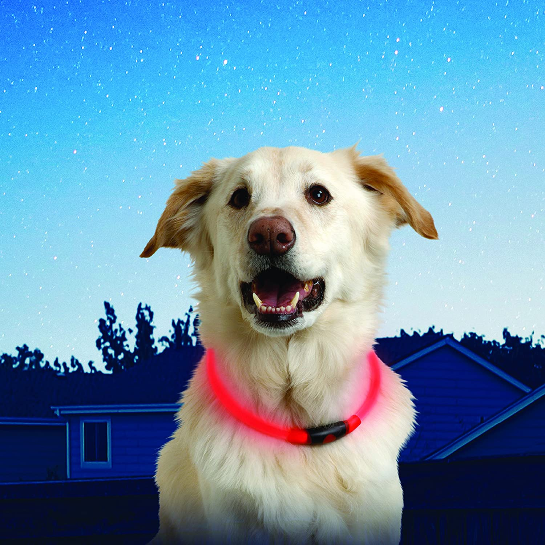 nitehowl-light-up-LED-dog-safety-collar
