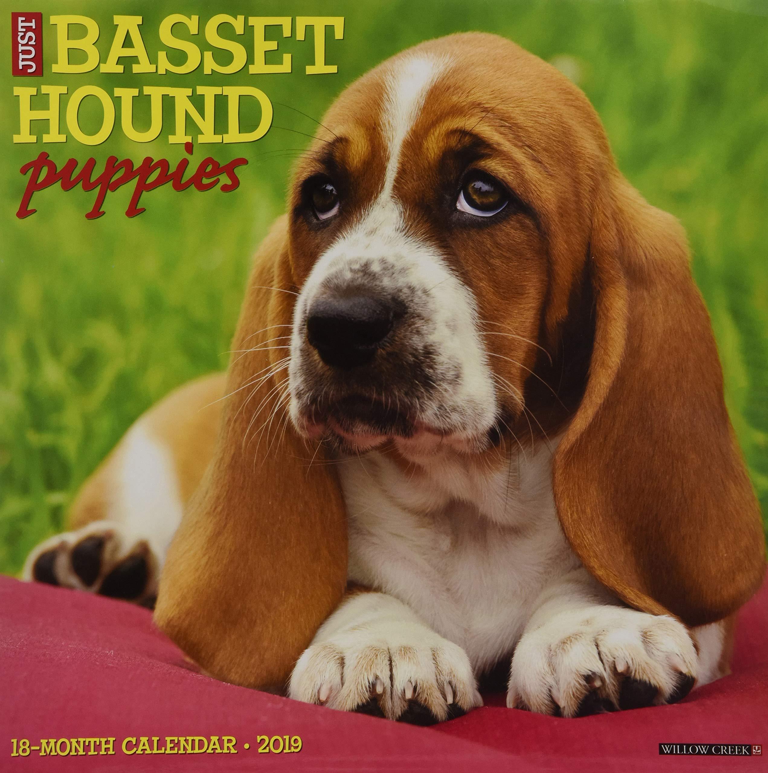 Download Just Basset Hound Puppies 2019 Wall Calendar (Dog Breed Calendar) pdf epub