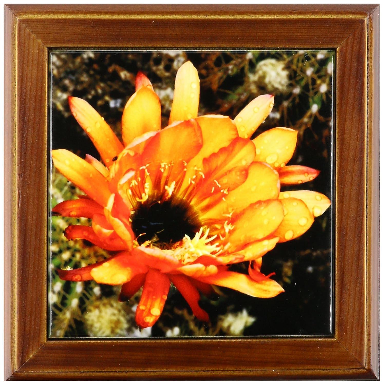 3dRose ft/_32390/_1 Decorative Colorful Garden Botanic Classic Plant SW Southwest Desert Cactus Red Orange Rain Flower-Framed Tile 8 By 8-Inch