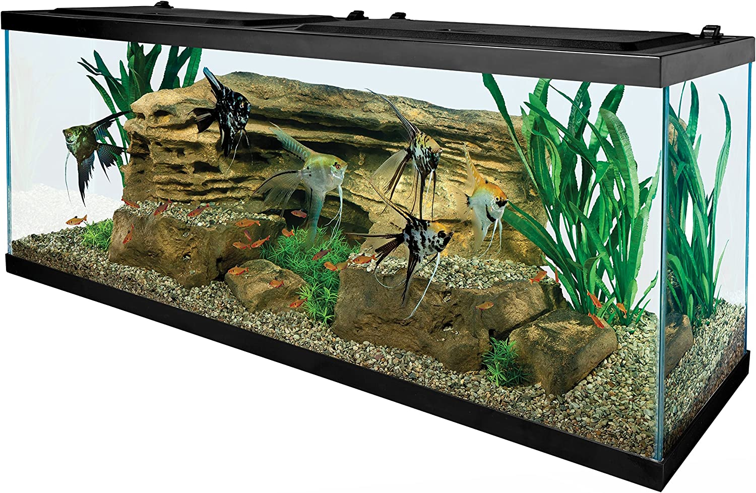 Amazon.com : Tetra 55 Gallon Aquarium Kit with Fish Tank, Fish Net ...