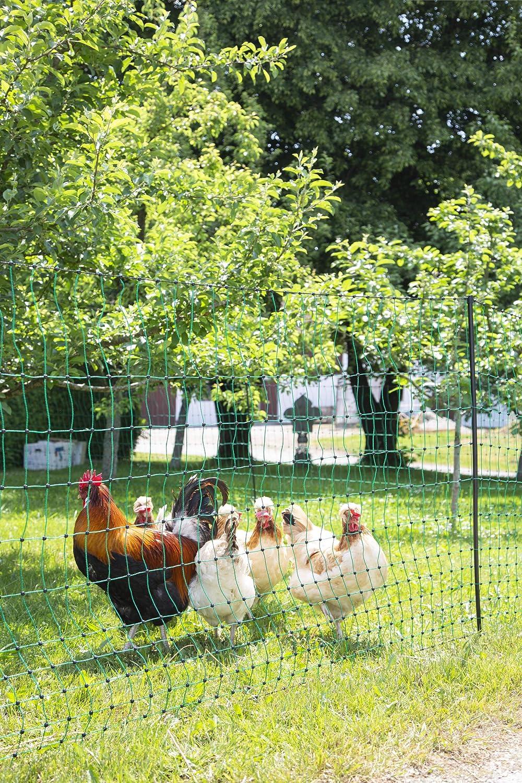 Geflügelnetz EURONETZ 1,12m 50m Doppelspitze elektrifizierbar Hühnerzaun Weide