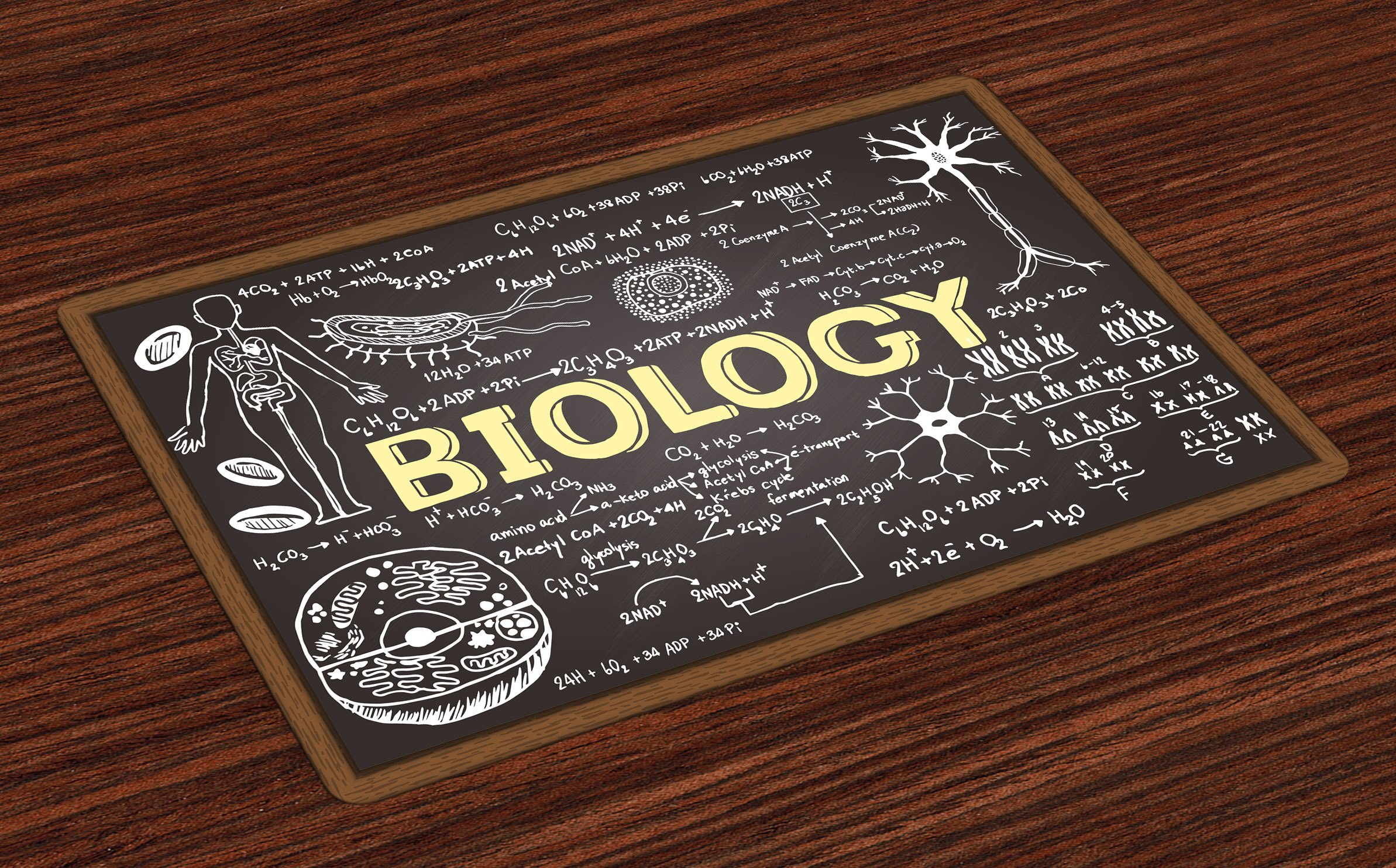 Ambesonne Educational Place Mats Set of 4, Black Chalkboard Biology Hand Written Symbols School Classroom, Washable Fabric Placemats for Dining Room Kitchen Table Decor, Black Brown Pale Yellow