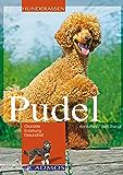 Pudel: Charakter, Erziehung, Gesundheit (Hunderassen)