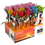 Edco 8711252921545,5x 5,5x 33cm luce solare Tulipano, Multicolore