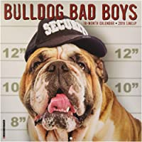 Bulldog Bad Boys 2019 Wall Calendar (Dog Breed Calendar)