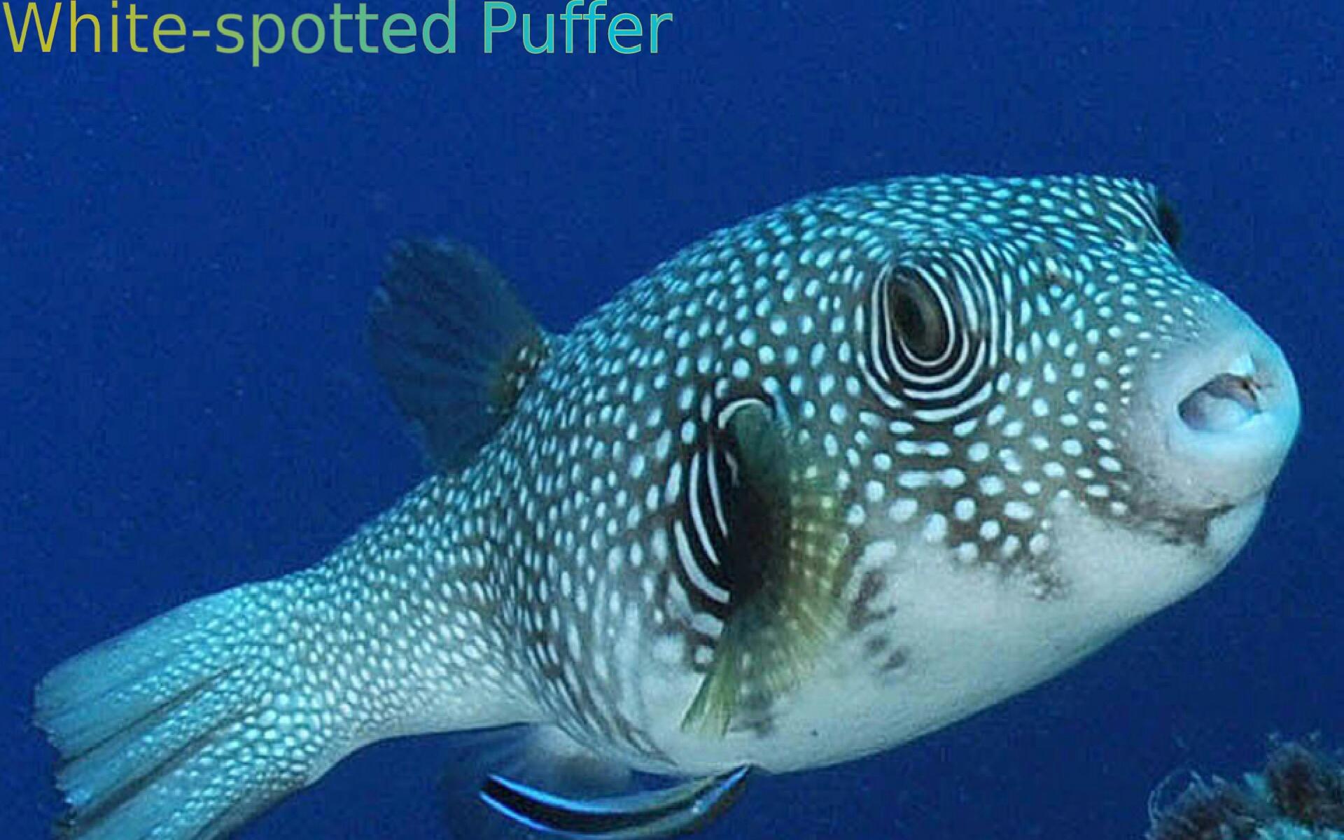 Marine aquarium fish appstore for android for Sjfc fish r net