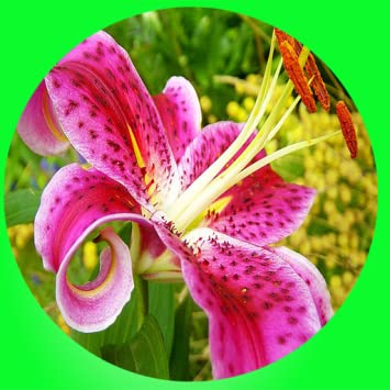 Amazon Most Beautiful Flowers In The World Appstore For Android