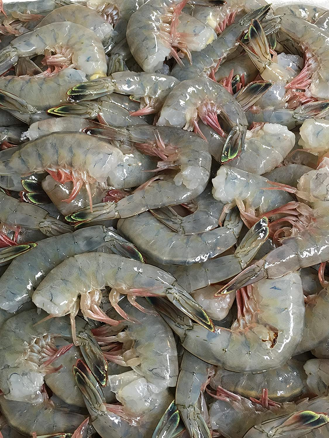 Fresh Jumbo Shrimp, 2 Lbs