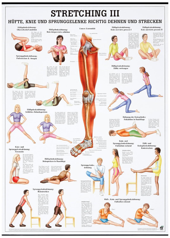 Stretching III Lehrtafel Anatomie 100x70 cm medizinische Lehrmittel 70 cm x 100 cm laminiert Ruediger Anatomie TA70LAM