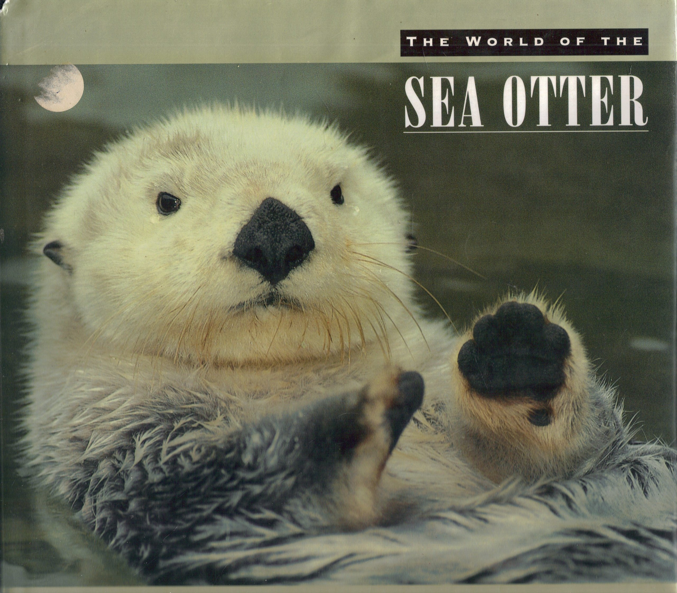 The World of the Sea Otter Hardcover – October 26, 1993 Stephani Paine Random House Inc. 0871565463