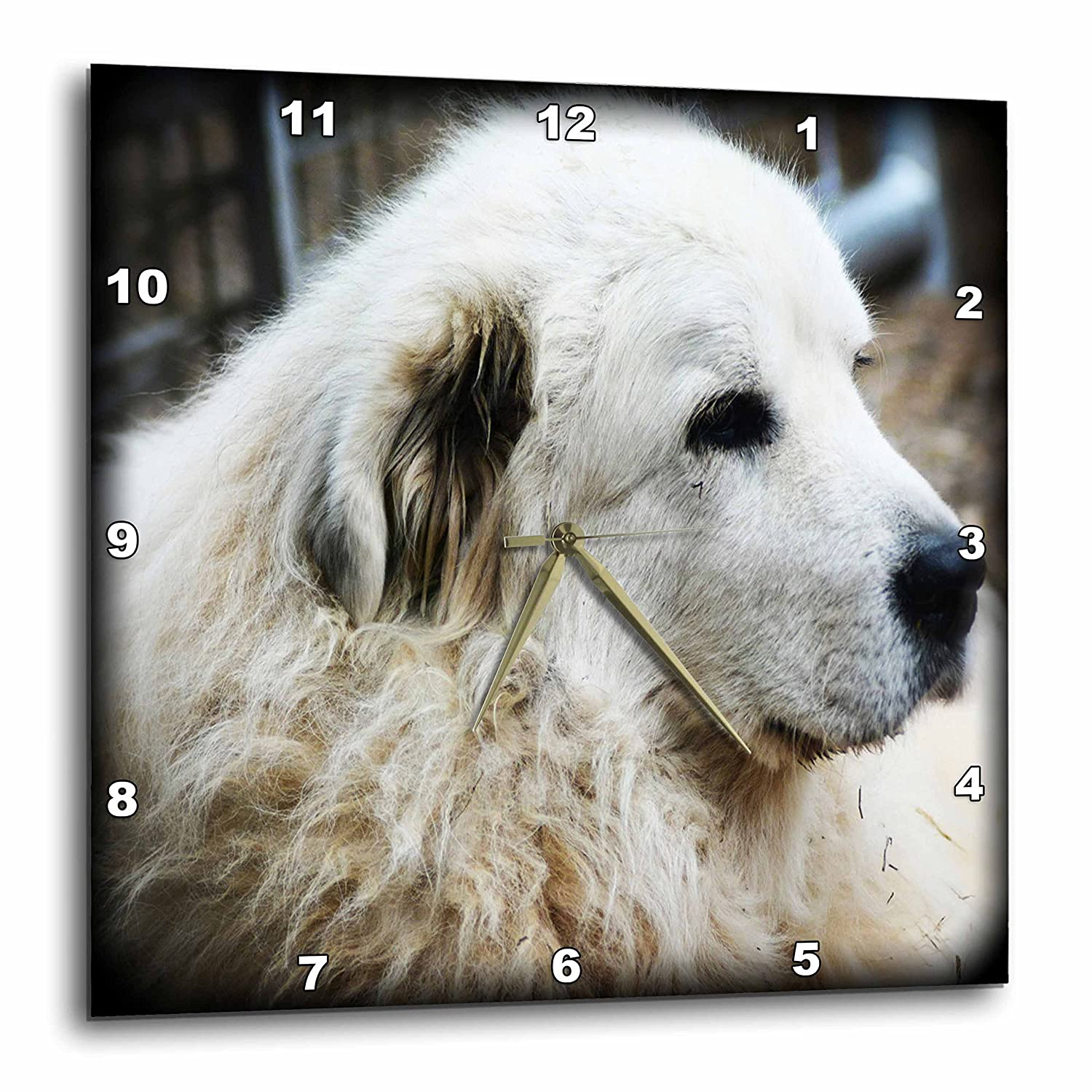 3dRose WhiteOaks Photography and Artwork - Dog Humor - Profile of a Guard Dog is an old farm dog who guards the animals - 10x10 Wall Clock