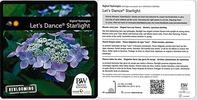 Amazon Com 1 Gal Let S Dance Starlight Bigleaf Hydrangea
