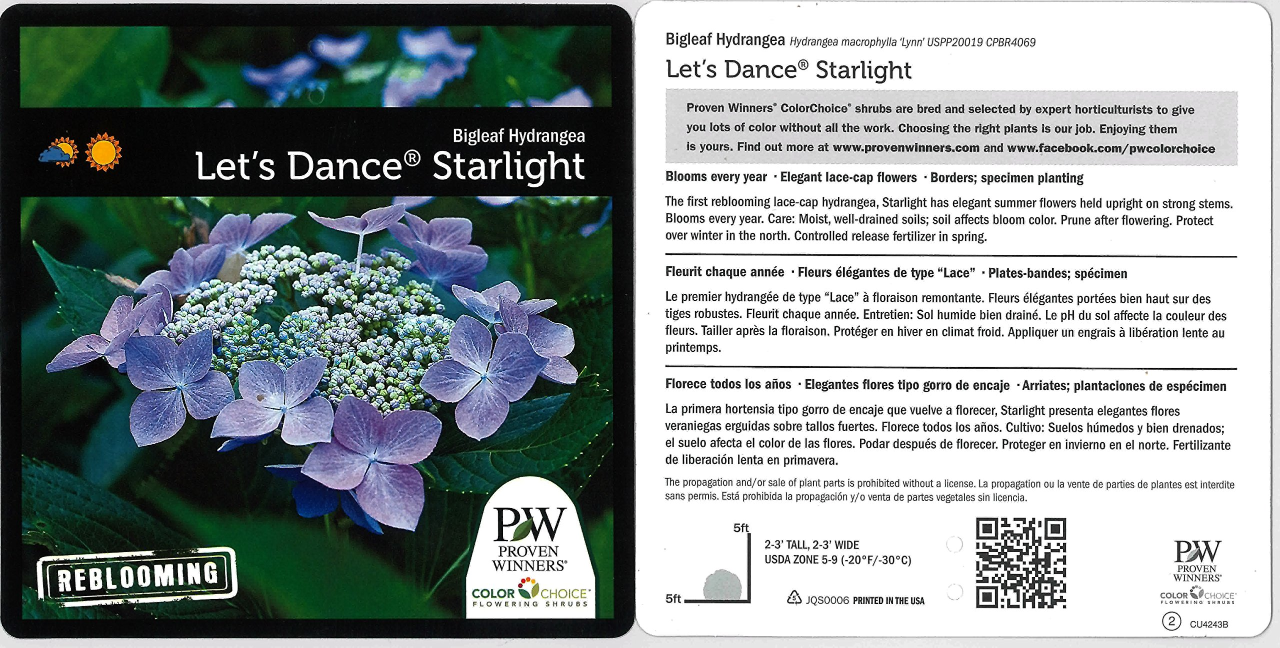1 Gal. Let's Dance Starlight Bigleaf Hydrangea (Macrophylla) Live Shrub, Blue or Pink Flowers by Proven Winners (Image #3)