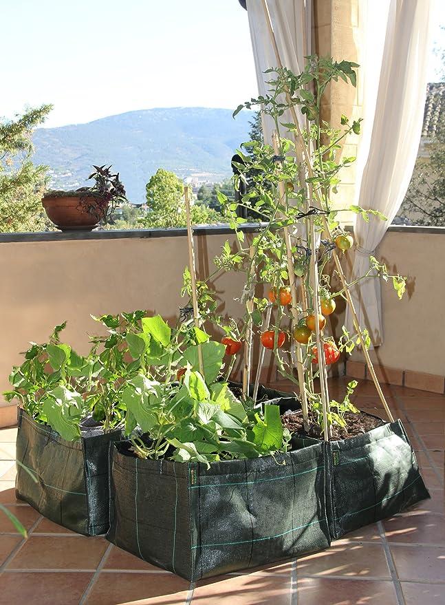 Minihuerto V303010: Amazon.es: Jardín