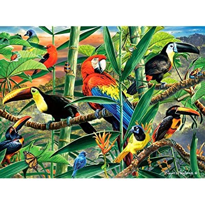 Buffalo Games - Hautman Brothers - Rainforest Menagerie - 1000 Piece Jigsaw Puzzle: Toys & Games