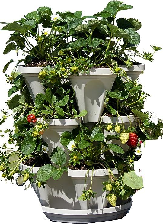 3 Tier apilable hierbas jardín maceta contenedor vertical – Juego de macetas para hierbas, fresas, flores y más.: Amazon.es: Jardín