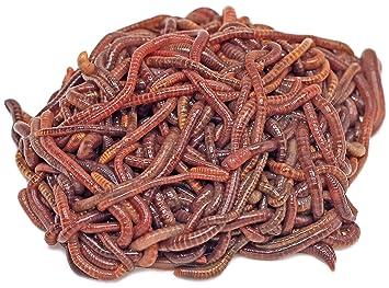 Da Wurmbauer Compost Gusanos Comprar - 250 - 500 - 1000 Unidades - lumbricidae Gusano Humus: Amazon.es: Jardín