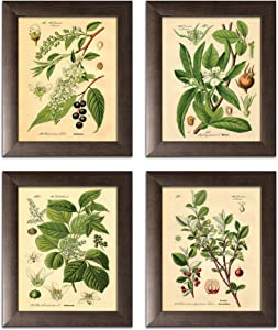 Gango Home Decor Popular Old-Fashioned Plant Botanical Prints; Four Brown 8x10-Inch Framed Fine Art Prints; Ready to Hang!