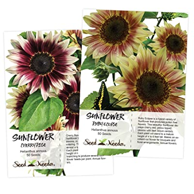Sunflower Seed Duo, Cherry Rose & Ruby Eclipse (Helianthus annuus) Hybrid Seeds by Seed Needs : Garden & Outdoor