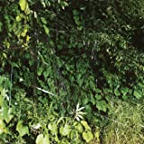EP C/B EP [輸入アナログ盤 / 2LP / DLカード付] (WARPLP141)_234 [Analog]