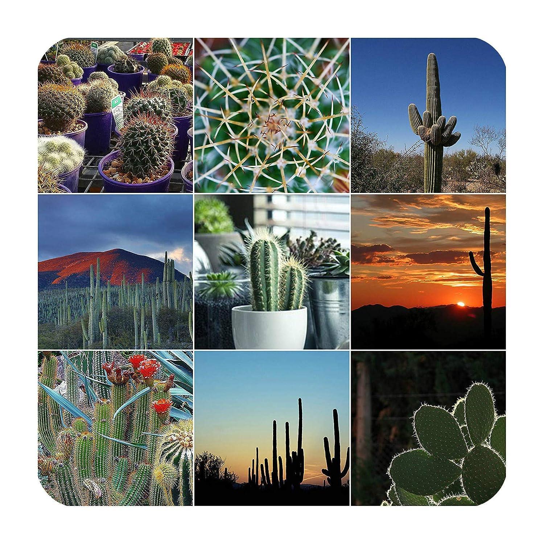 Cactus Soil & Succulent Compost Potting Mix Plus TOP Dressing KIT Terra Core