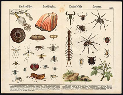 Envejecido print-barnacle-tarantula-spider-flea-scorpion-centipede ...