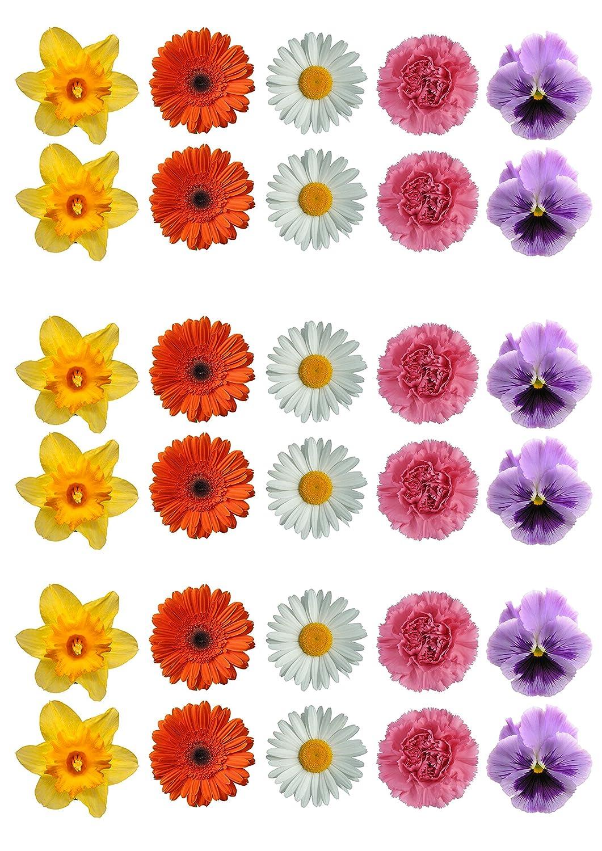Top That/ selecci/ón de flores decoraci/ón de pasteles papel comestible/ /Lote de 30 /de margaritas Gerbera flores