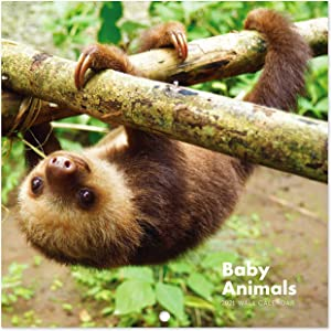 2021 Calendar - Baby Animals Wall Calendar 2021 with Thick & Sturdy Paper, 12 x 12 inches, 18 Months, January 2021 - December 2021