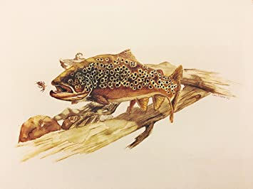 Amazon Com Brown Trout Watercolor Painting Print Wall Décor For