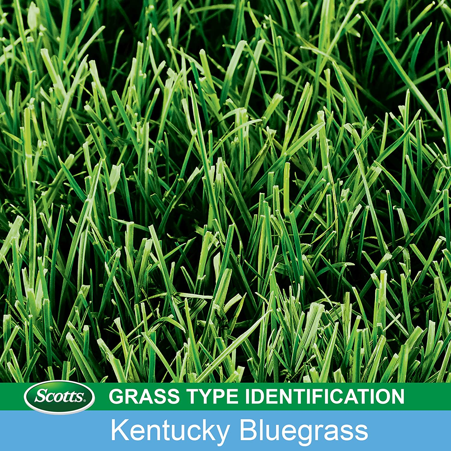 Scotts Turf Builder Grass Seed Image 3