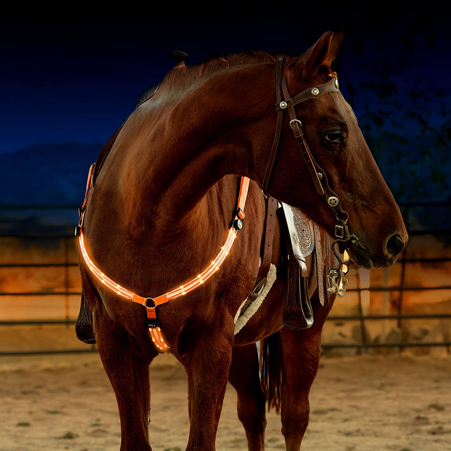 amazon com led horse breastplate collar usb rechargeable best