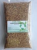 Certified Organic Wheatgrass Seed 1lb. Non-GMO - Guaranteed to Grow