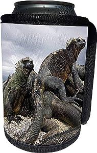 3dRose Danita Delimont - Galapagos Islands - Ecuador, Galapagos Islands, Marine iguana - SA07 MDE0051 - Michael DeFreitas - Can Cooler Bottle Wrap (cc_86219_1)