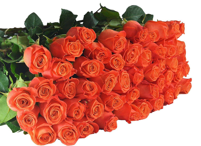 Amazon.com : Farm2Door Wholesale Roses: 25 Fresh Orange Roses (Long ...