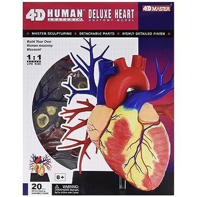 Tedco Human Anatomy - Deluxe Heart Anatomy Model: Toys & Games