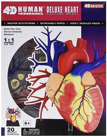 4D Anatomie Deluxe Modell Menschliches Herz: Amazon.de: Spielzeug