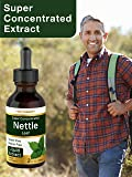 Nettle Leaf Extract   2 oz   Alcohol Free