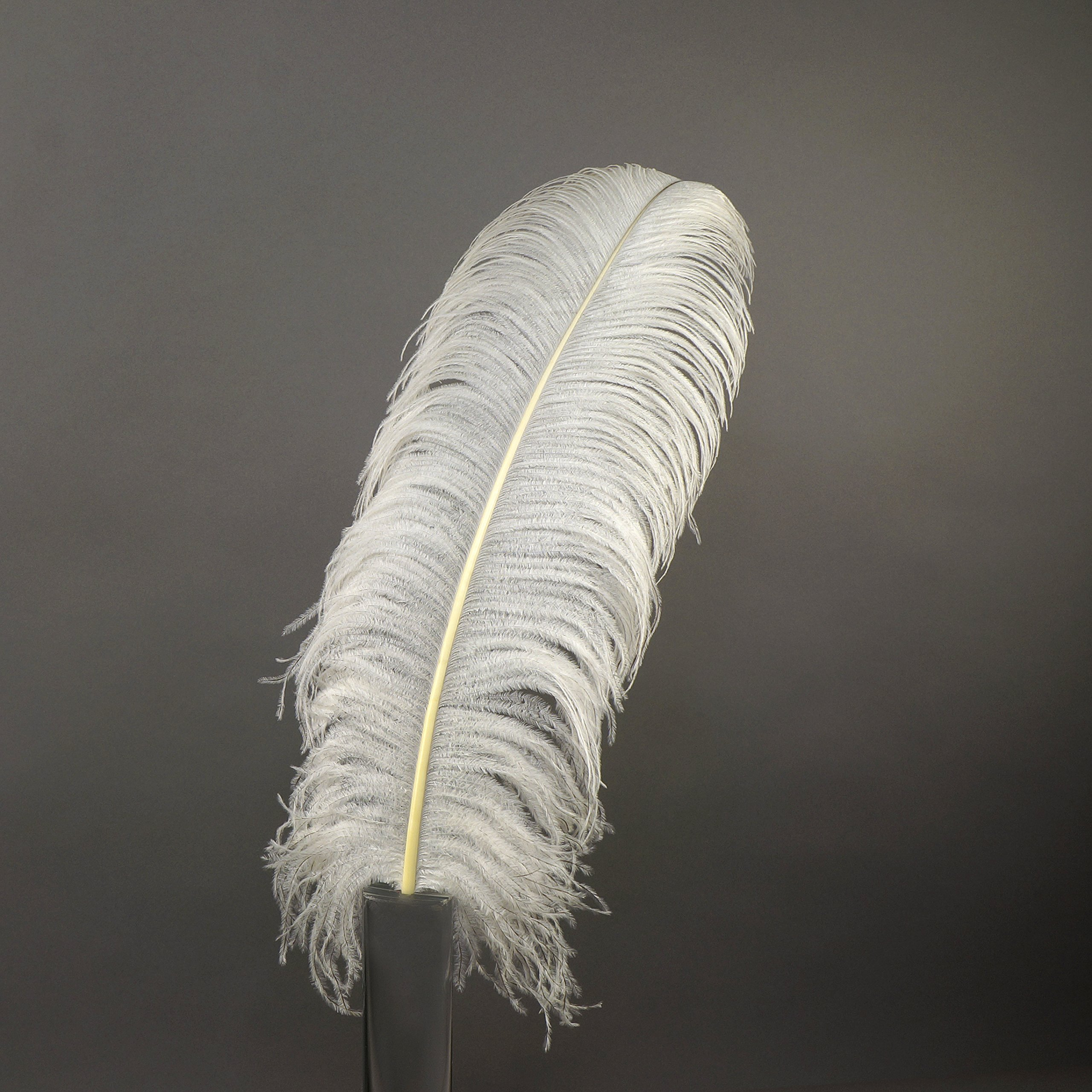 ZUCKER Ostrich Feathers Selected Drabs - 17-25'' - 25pcs - Natural