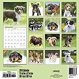 2018 Puppies Wall Calendar