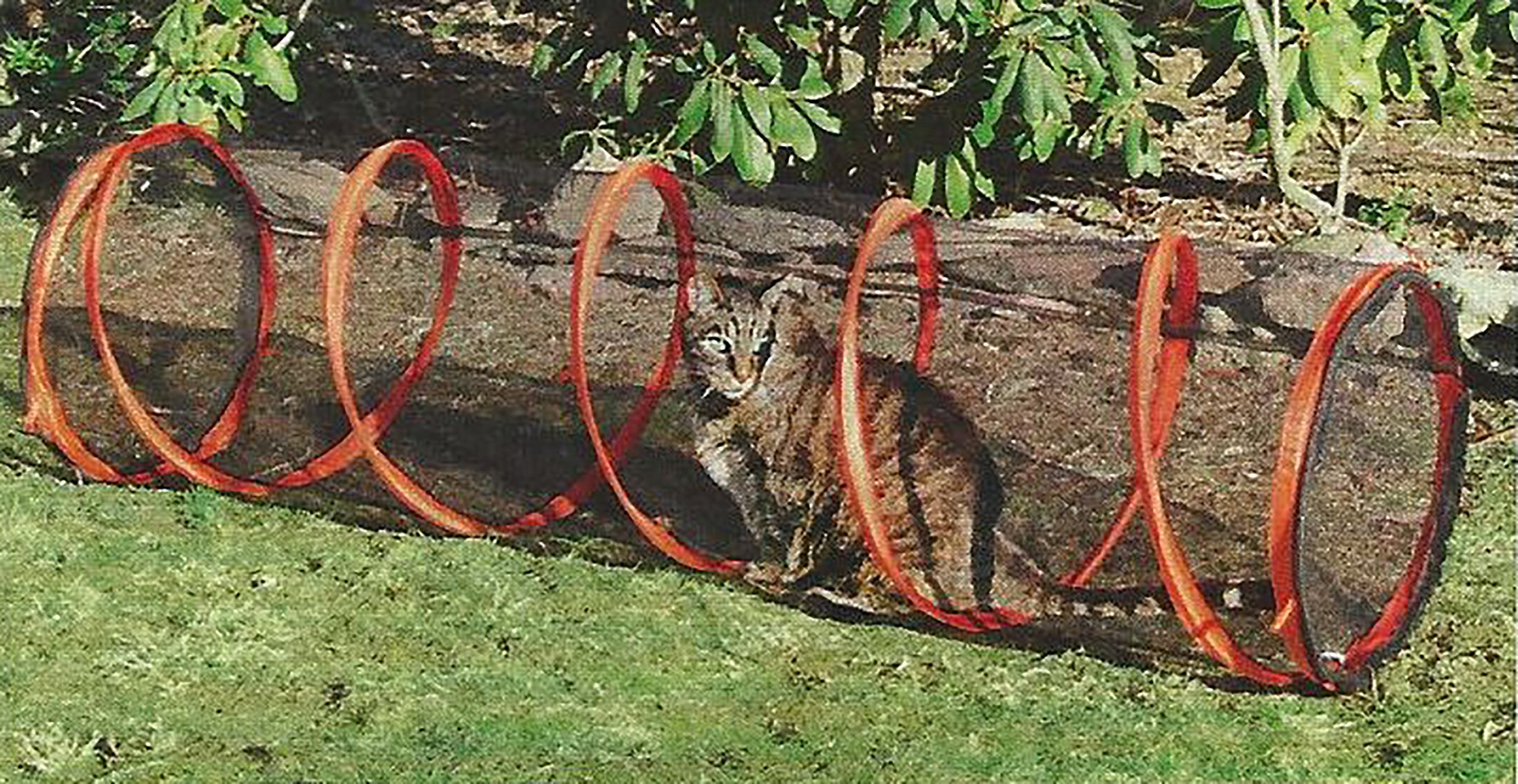5 FT. Indoor/Outdoor Steel Spring Frame Cat Tunnel With Carry Case by MSR